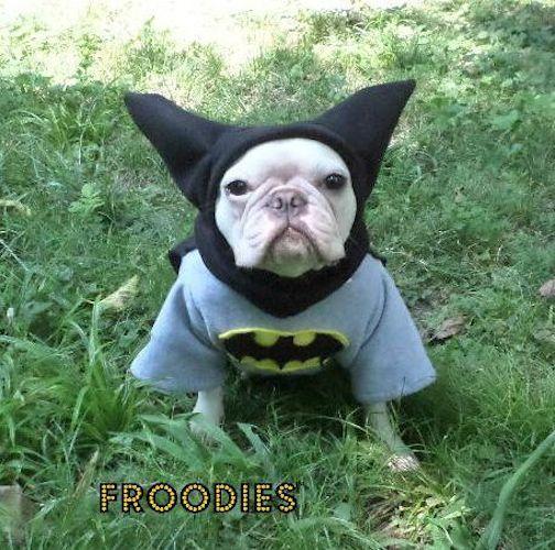 Bouledogue Français Boston Terrier Pug Dog Froodies Hoodies Halloween Costume Cosplay Batman Fleece veste Sweatshirt Coat                                                                                                                                                                                 Plus