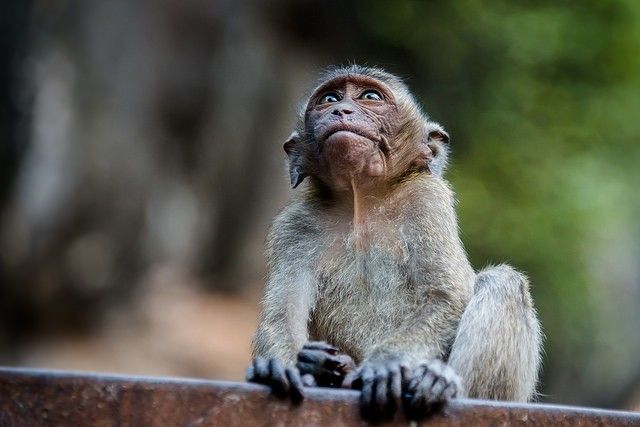 Here Are The 18 Breeding Facilities Responsible For Importing 18,000 Lab Monkeys Each Year