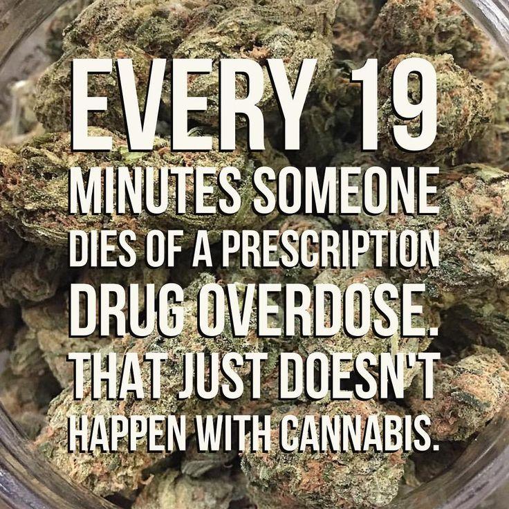 show me how to grow marijuana plants