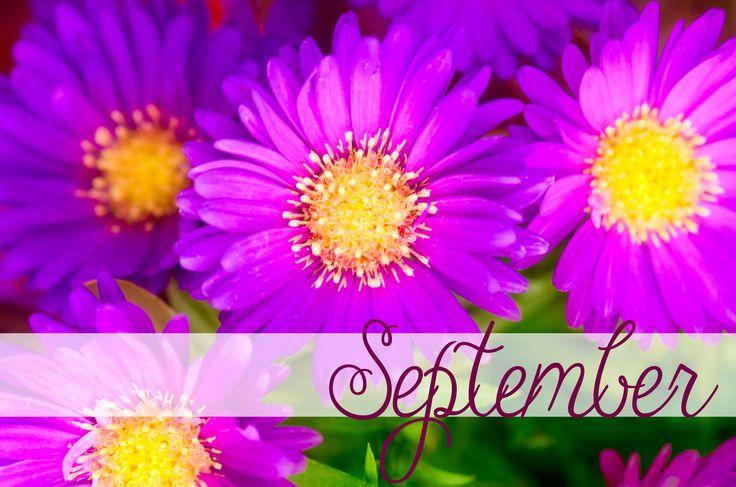 happy september birthday september birthdflower is the