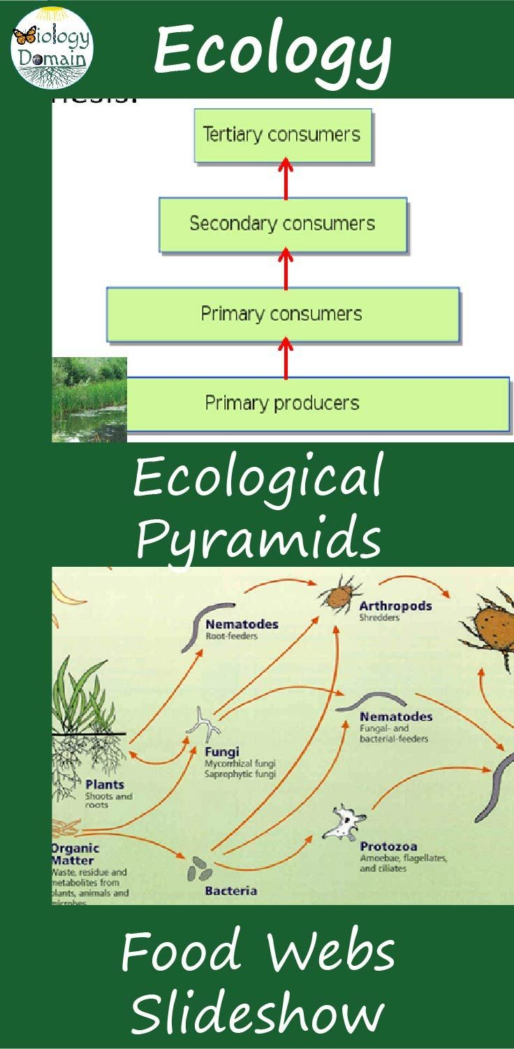 Food Webs And Ecological Pyramids Powerpoint Slide Show Ecological Pyramid Biology Lesson Plans Food Web