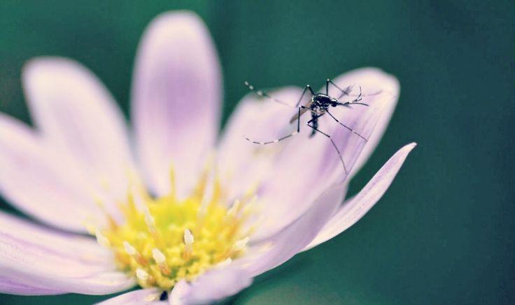Muggen: 8x Muggen Verjagen zonder Gif