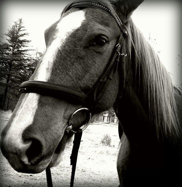 Luke.the family horse best new pet ever