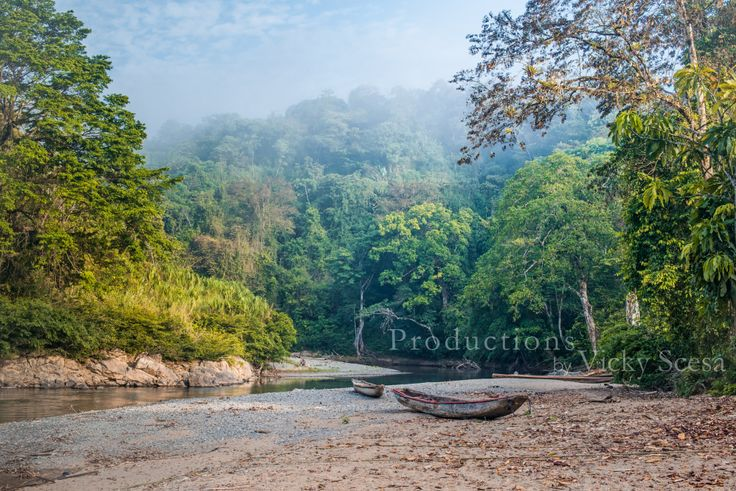"""""""Indigenous Landscape: Embera Puru"""" by Vicky Scesa is one image from her series shot in the Chagres National Park jungles of Panama, Republic of Panama.This premium photographic print is digitally printed on Premium Lustre Photographic Paper for gallery quality display. Under options, there are many available choices for print sizes and matting. Please use the contact form for special requests i.e. Mat colors and additional sizes"""
