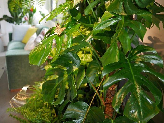 tendance jungle nature luxuriante et camaeu de verts dans la dco - Kopfteil Plant Knig