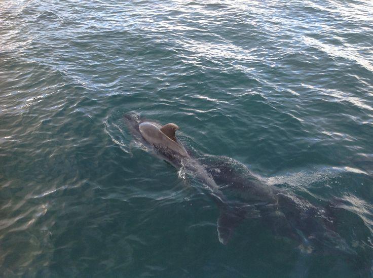 Ya Dolphins