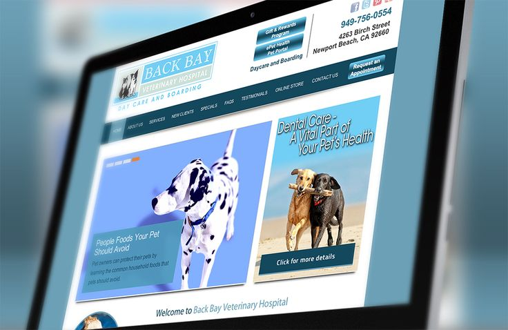 Animal Hospitals In Newport Beach Ca