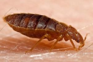 Bedbugs found in a NYC school