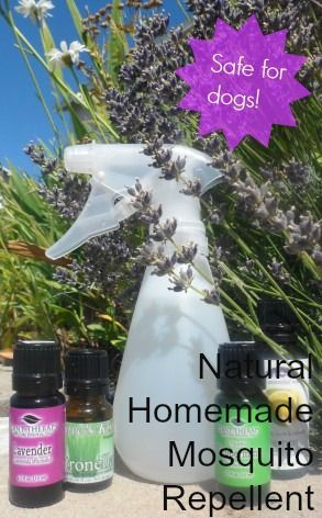 All natural mosquito repellent you can make from essential oils. Safe to use on dogs!