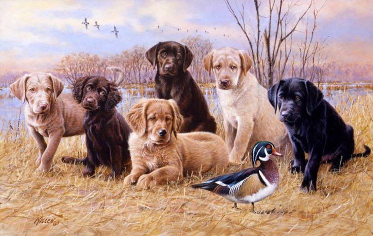 labrador retriever puppy - Google-søgning