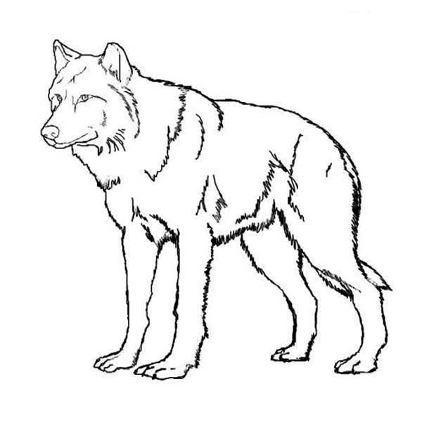 Print realistic wolf face coloring pages Wolf colors