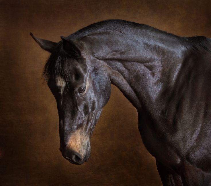 Horse-photographer1.jpg (1000×882)
