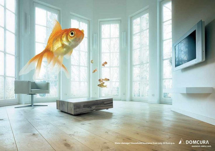 Domcura Household Insurance: Fish