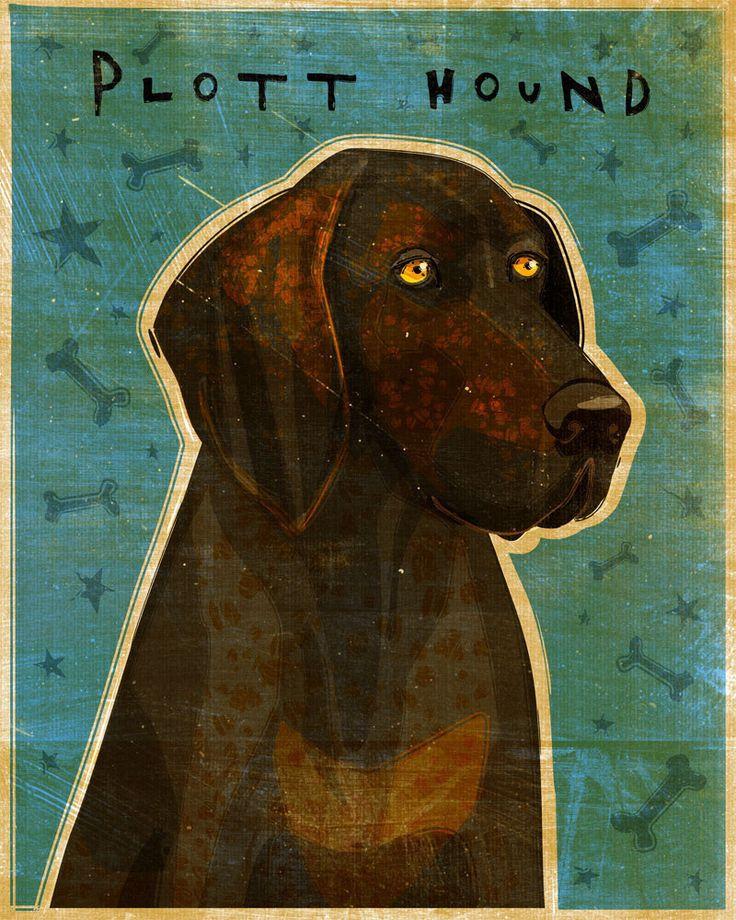 "Plott Hound Print 8"" x 10""- Plott Hound Art- Dog Print- Plott Hound Gifts- Family Gifts for Pet Lovers- Gifts for Employees by johnwgolden on Etsy https://www.etsy.com/listing/98460165/plott-hound-print-8-x-10-plott-hound-art"