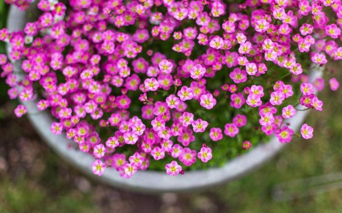 frühjahrsblumen blumendeko pflanzenideen dekoideen