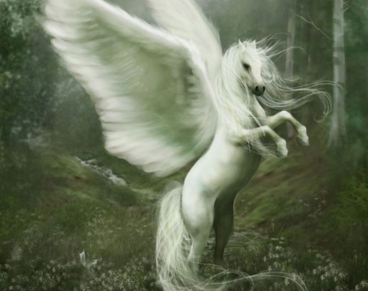 forest forests horse horses magical mystical mythical ...