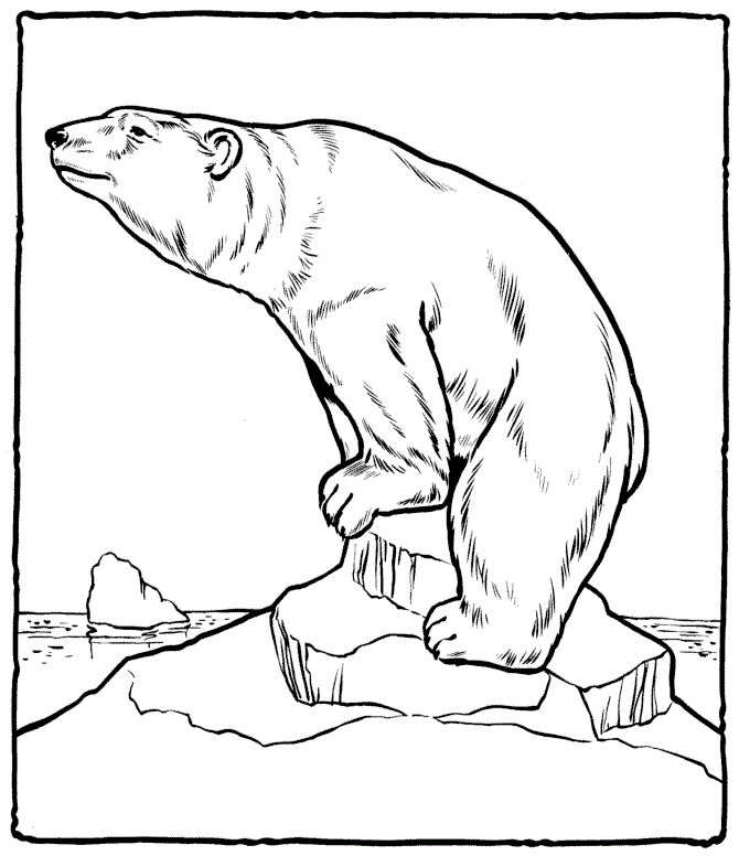 Free Printable Polar Bear Coloring Pages For Kids | Bear ...
