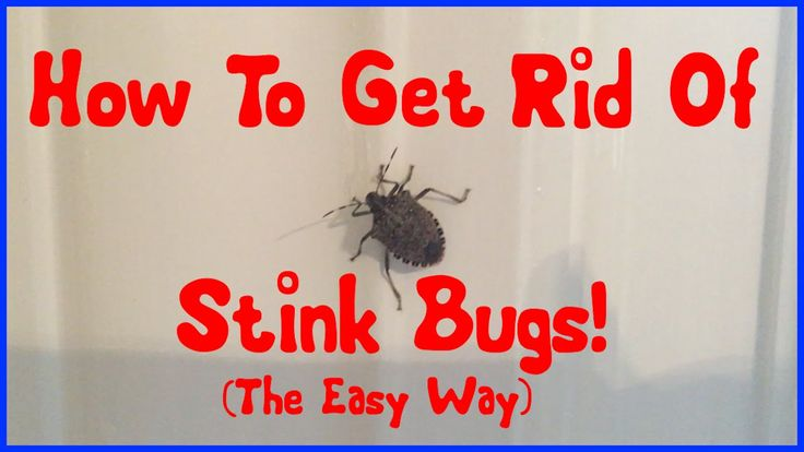 16 best stink bug killer images on pinterest stink bugs - How to get rid of stink bugs in garden ...
