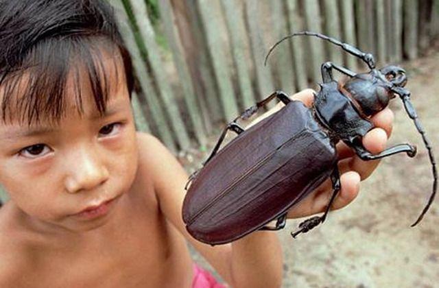 Los 10 insectos más atemorizantes que existen