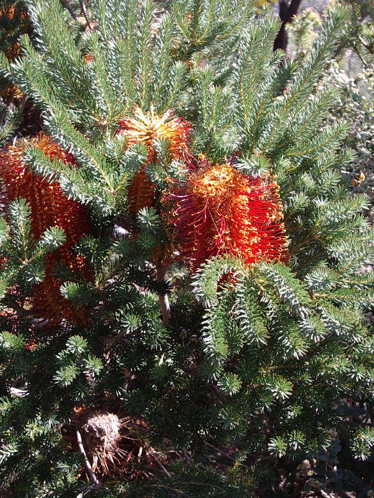 At Burrendong Arboretum