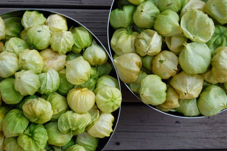 Oh tomatillos. They are everywhere. In my kitchen at least. It was a pretty full harvest from my garden and now I am elbow deep in them while trying to find the best salsa recipe. But before that, …