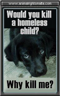 Something to think about....Save a life, ADOPT!:
