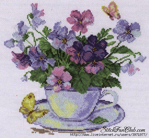 Teacup of Violas