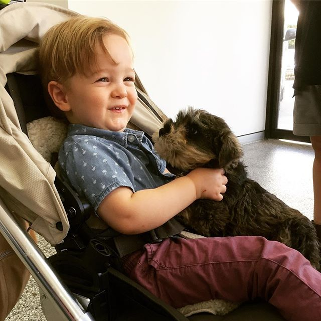 Happy Furbaby Friday!  Little Basil was excited to meet his new owner at our Brisbane Transit Lounge yesterday, after a trip from Albury!