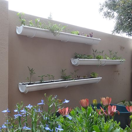 Make Build Vegetable Or Herb Gutter Garden With Dogs And