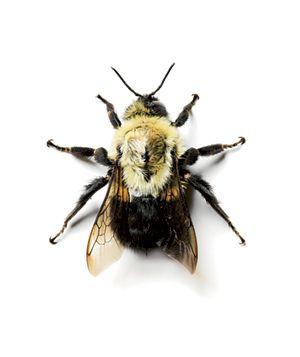 Experts weigh in on how to treat bee stings, mosquito bites, and more common insect complaints.
