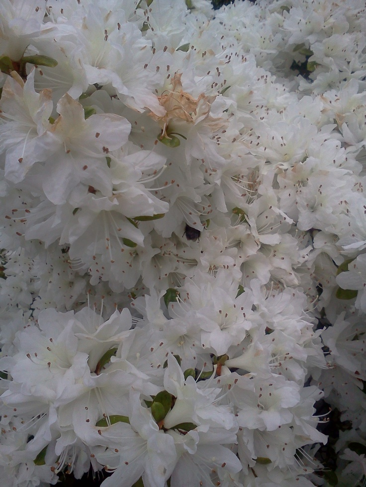 White ones...