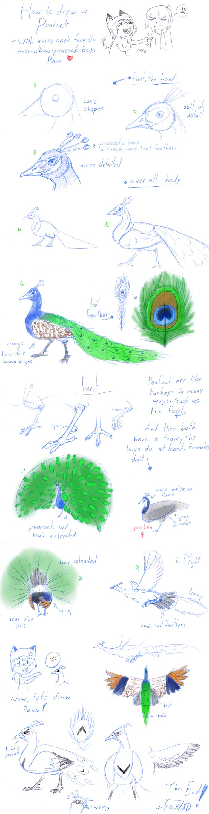 How to Draw - Peacocks by Fox7XD