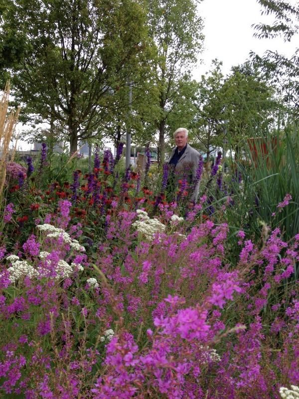 408 best images about gardens of piet oudolf on pinterest for Piet oudolf plant list