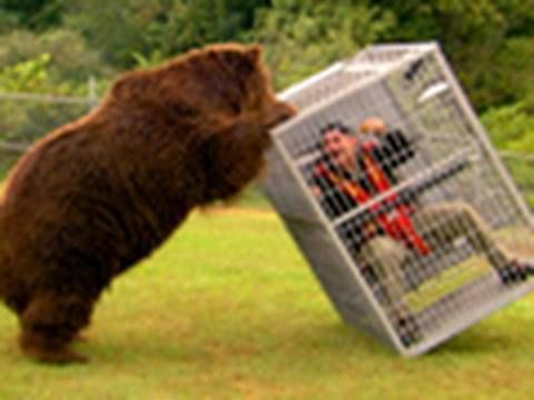 funny animals Brown Bear Attack 2010  Dangerous Encounters: Alaska's Bear Country and Beyond : FRI SEP 3 9p et/pt : http://channel.nationalgeographic.com...  Brady gets up close and personal with a brown bear to show you what it's like to get pushed around by such a powerful animal.