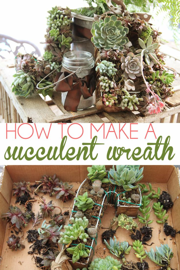 Excellent tutorial on how to DIY a succulent wreath. Love the initial  wreath idea for
