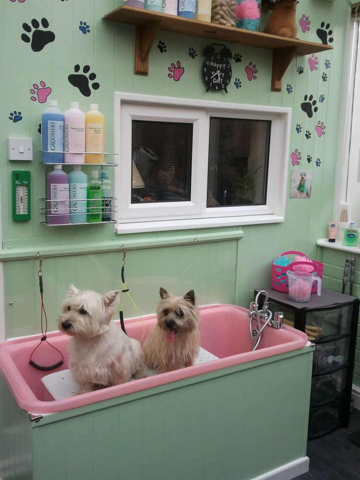Grooming Shops For Dogs