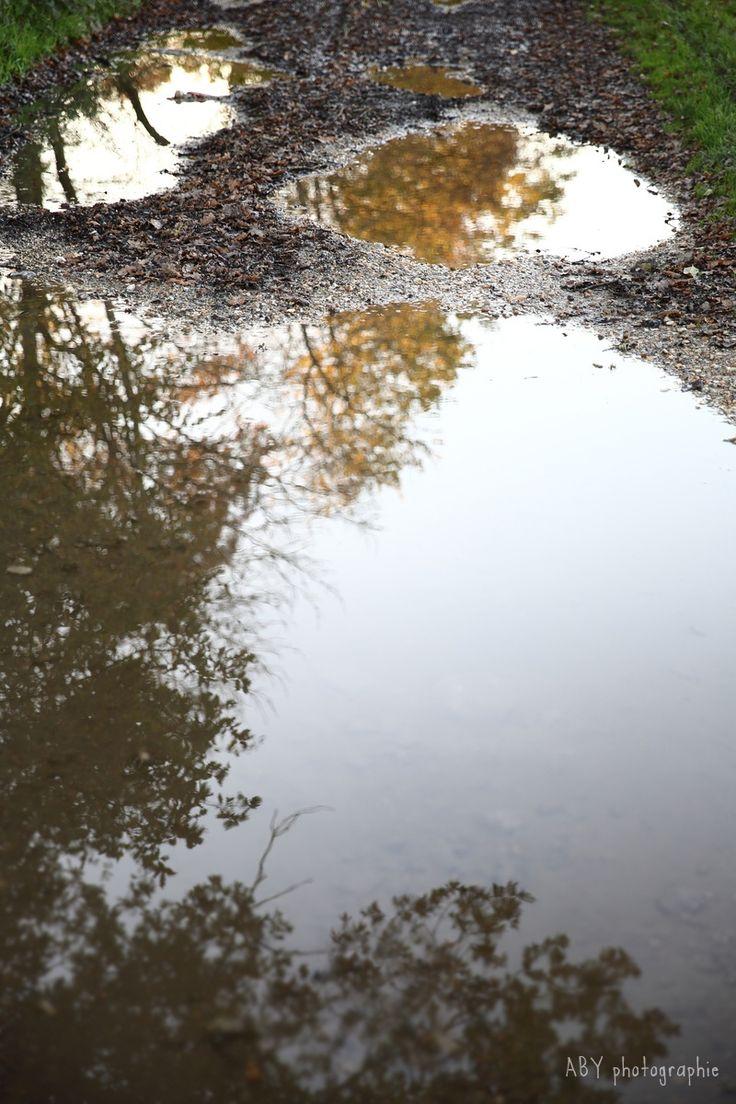 reflets orangés dans les flaques d'eau en forêt