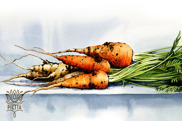 Vegetable watercolor set for LUX Publica on Behance