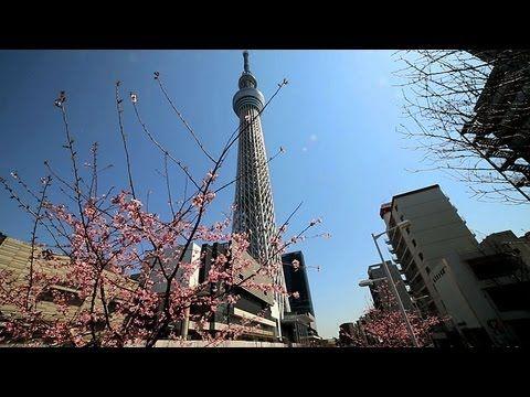 東京スカイツリーと早咲き桜 Tokyo Skytree & Cherry blossoms( Shot on EOS 5D Mark 3 )