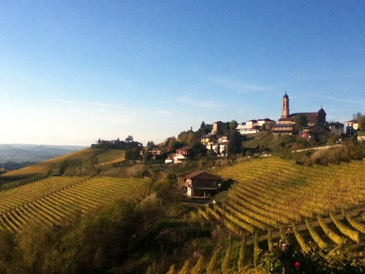 Treiso Barbaresco Vineyards