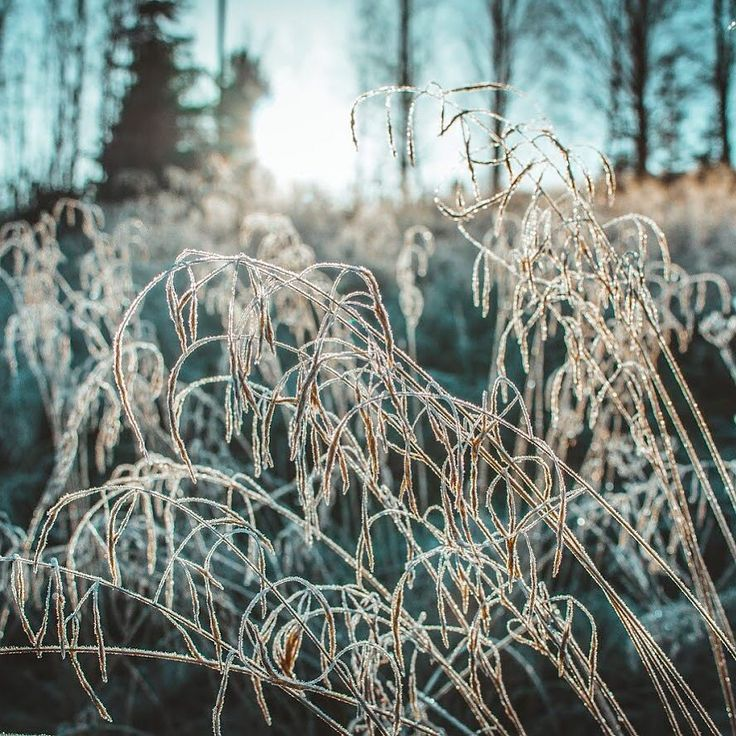 Winter is coming...       #ig_nature #frost #frozen #snow #nature #naturegram #winter #autumn #fall #canon70d #canonglobal #ig_color #got #photographer #instadaily #instagood