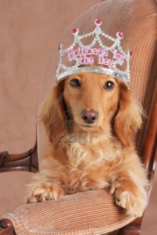 Treat Your Dog Like A Princess And Give Them The Best Toys