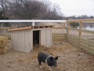 Life in a Little Red Farmhouse: New digs for the pigs