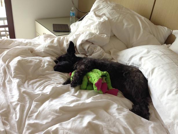 The Four Seasons Resort Orlando At Walt Disney World Is Little Dog Roved