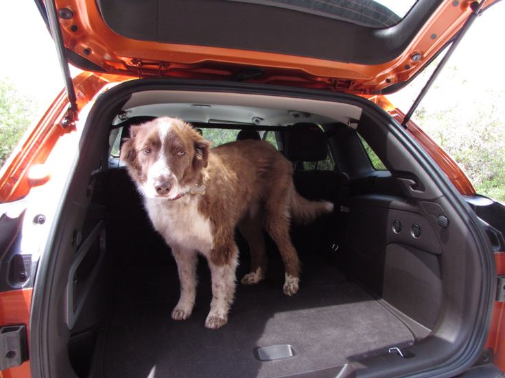 Pepper's ready to go in the new #JEEPCHEROKEE ! Raingler's ceiling, cargo area nets and military grade mesh and net barriers.  #TRAILHAWK models too! #RAINGLERNET #JEEPLIFE http://www.raingler.com/#!jeep-merchandise/ch9y