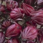Qué hacer con la cosecha de 'Flor de Jamaica'