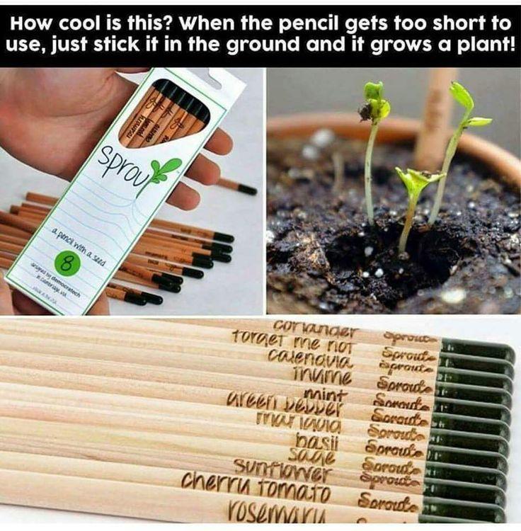 Rostoucí tužky