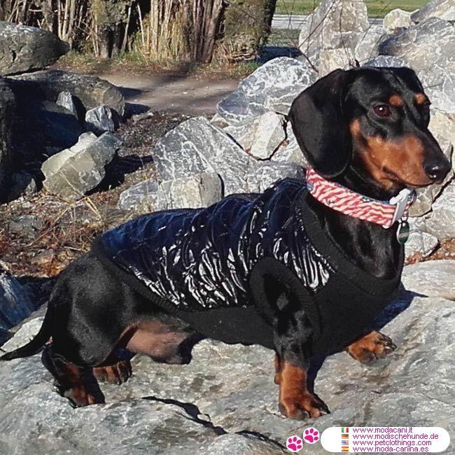 Giacca Nera con apertura sul dorso per cani piccoli #ModaCani #Bassotto - Giacca Trapuntata Nera con apertura sul dorso per cani piccoli, in Nylon trapuntato esterno ed interno rivestito in pile, per mantenere caldo il cane
