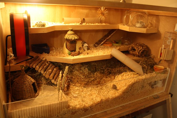 building a large wooden cage | Hazel's cage. Can you find her in the picture?