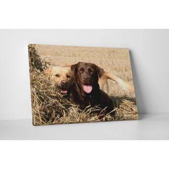 Labrador párocska : Állatok - KaticaMatrica.hu - A minőségi falmatrica és faltetoválás webáruház